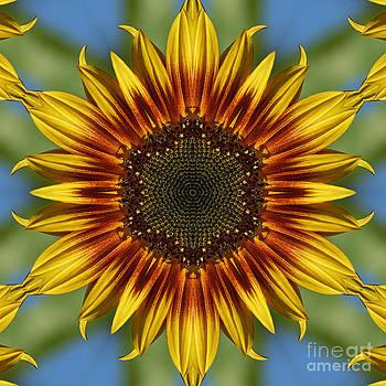 Sunflower Kaleidoscope by Cindi Ressler