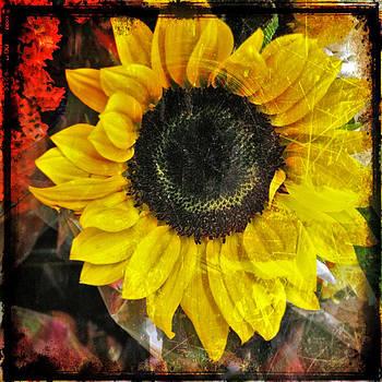 Linda Sannuti - Sunflower
