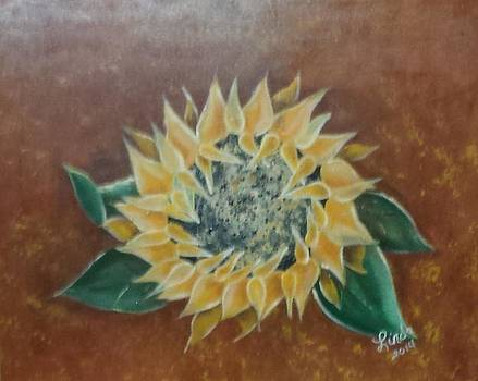 Sunflower  by Linda Tyson