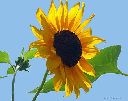 Sunflower by Mikki Cucuzzo