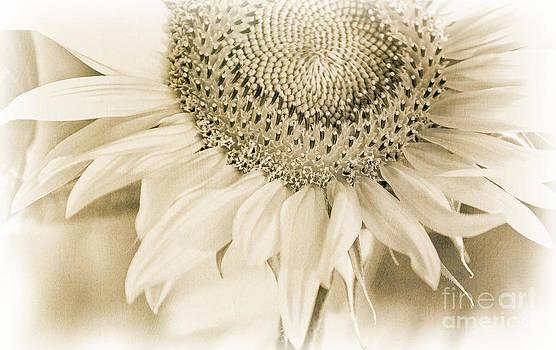 Kathleen K Parker - Sunflower Monochrome