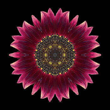 Sunflower Moulin Rouge I Flower Mandala by David J Bookbinder