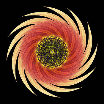 Sunflower Moulin Rouge VII Flower Mandala by David J Bookbinder