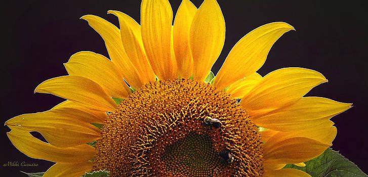 Sunflower on black by Mikki Cucuzzo