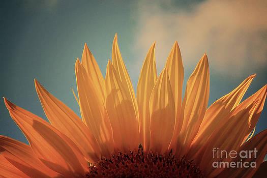 Sunflower Petals Series 5 by Joseph Desmond