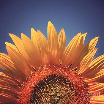Sunflower Petals Series 8 by Joseph Desmond