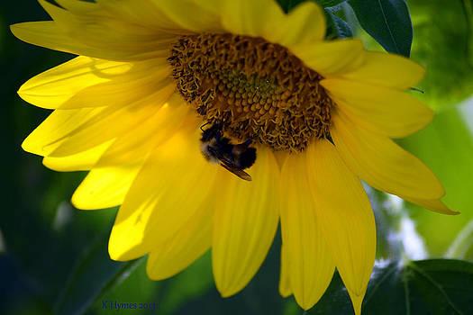 Sunflower Resort by Kim Hymes