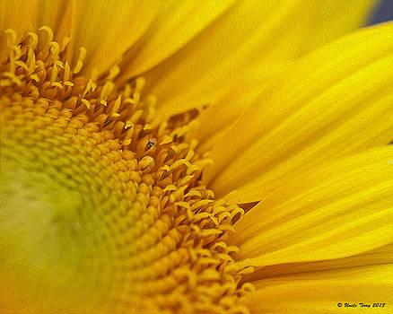 Sunflower Seeds by Terry Jacumin