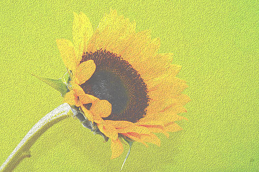 Sunflower by Sherry Allen