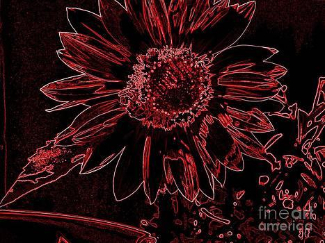 Sunflower by Susan Saver