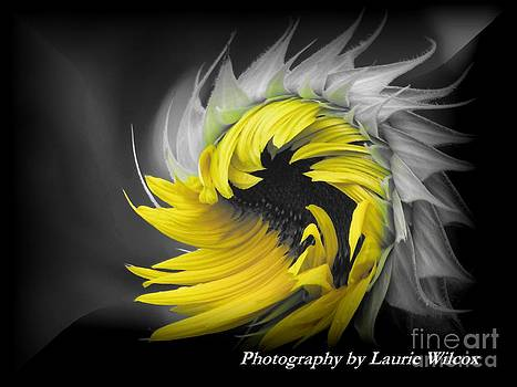 Sunflower Swish by Laurie Wilcox