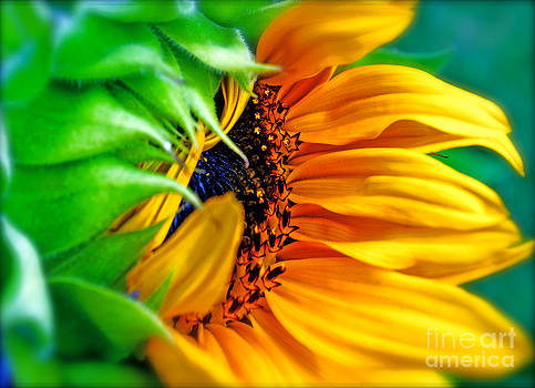 Gwyn Newcombe - Sunflower Volunteer Good Morning