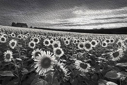 Debra and Dave Vanderlaan - Sunflowers Black and White