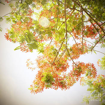Charmian Vistaunet - Sunlight on Poinciana I