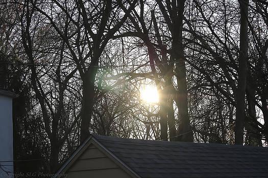 Sunlight by Stacie  Goodloe