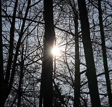 Sunlight Through The Trees by Emelyn McKitrick