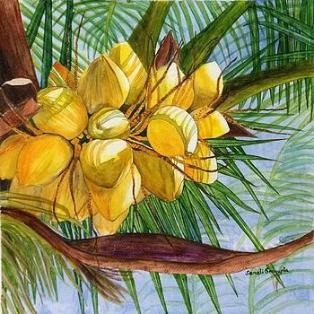 Sunlit Coconuts by Sonali Sengupta