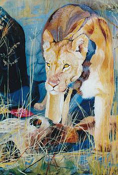 Sunlit Lion by Janine Hoefler