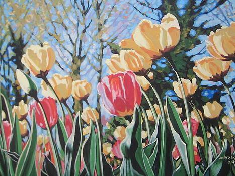 Sunlit Tulips by Andrei Attila Mezei