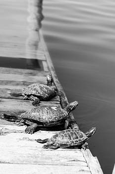 Sunning Snappers 2 by Chris Ann Wiggins