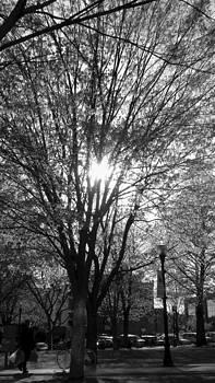 Sunny City Hall Park by Wendell Ducharme Jr
