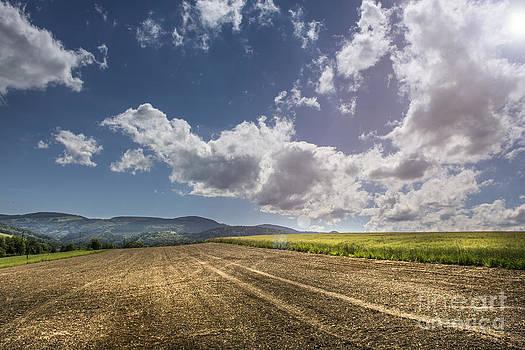 Sunny Day by Bruno Santoro
