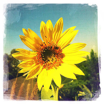 Sunny Day Sunflower by Nina Prommer