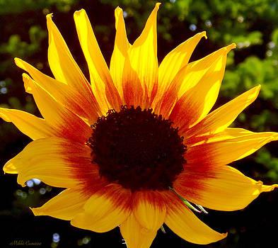 Sunny Flower by Mikki Cucuzzo