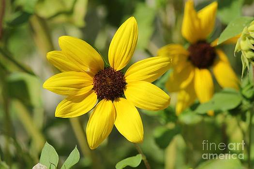 Sunny Flowers by Theresa Willingham