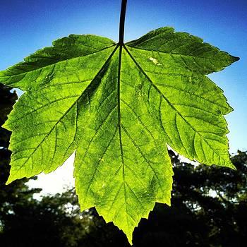 Sunny Leaf by Henry  Turner