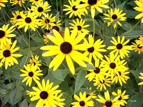Sunny Petals by Janice W Deetscreek