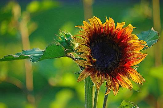 Sunny Sunflower by Denise Darby
