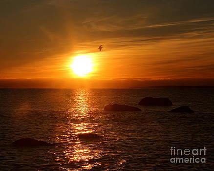 Sunrise by Deborah  Smith