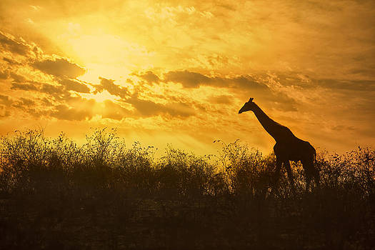 Sunrise in Africa by Mario Moreno