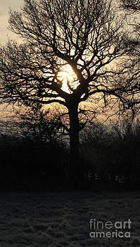 Sunrise in Frost Field by Kathryn Bell