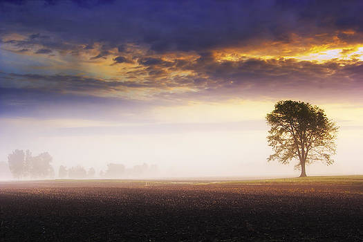 Sunrise on the farm with a welcome fog by Michael Huddleston
