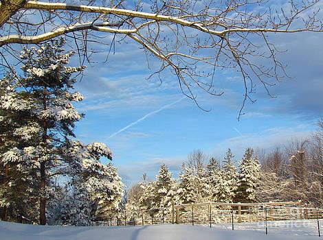 Sunrise on the Snow Pines by Deborah Johnson