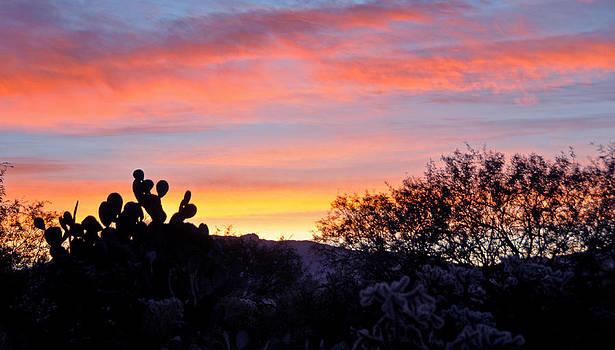 Sunrise Over The Sonoran Desert by Jon Van Gilder