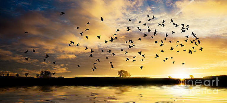 Simon Bratt Photography LRPS - Birds awaken at sunrise