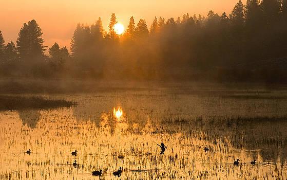 Sunrise Take Off by Judi Baker