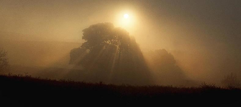 Sunrise Through the Fog by Judi Baker