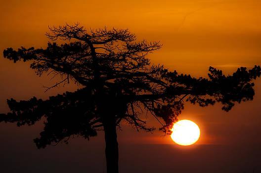 Sunrise Tree by Dave Weth