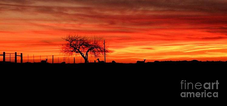 Sunset and Deer Silhouette by Julia  Walsh