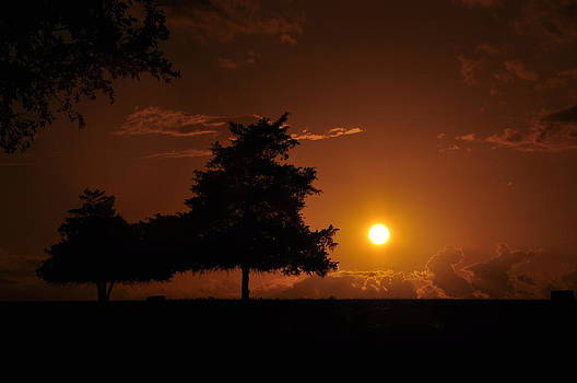 Sunset and Trees by Cherie Haines