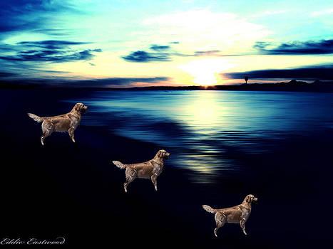 Sunset at Edmonds Washington Off Leash Dog Park by Eddie Eastwood