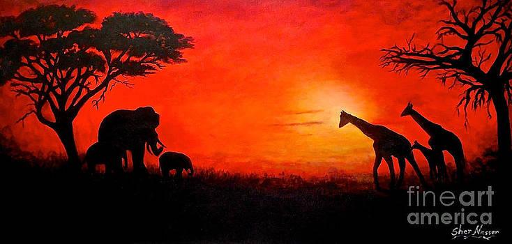 Sunset at Serengeti by Sher Nasser