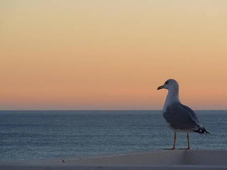 Adrienne Franklin - Sunset Bird
