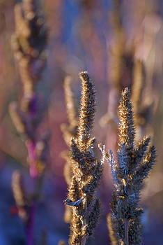 Jeff Brunton - Sunset Crater NM Fall Wildflower 14