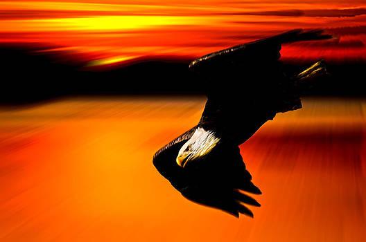 Randall Branham - Sunset Dive