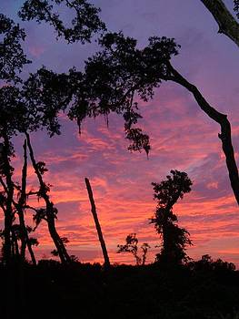 Sunset Florida Style by Don Bangert